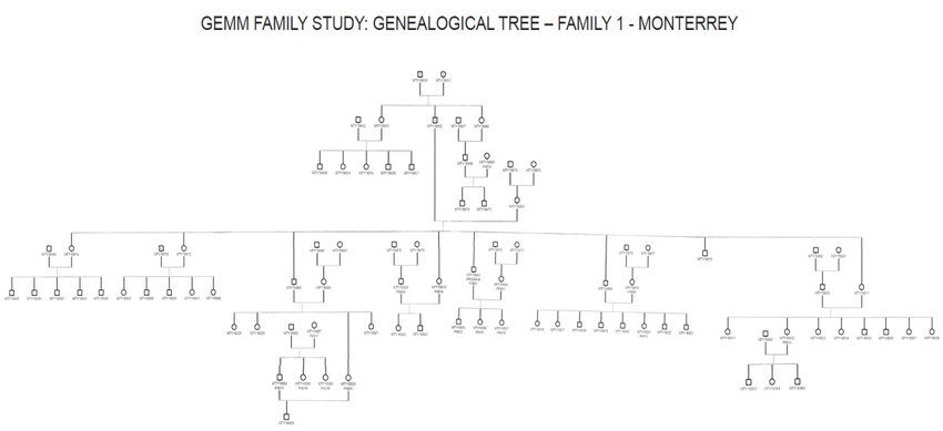 Three-generation family tree from Monterrey, Mexico as an example of