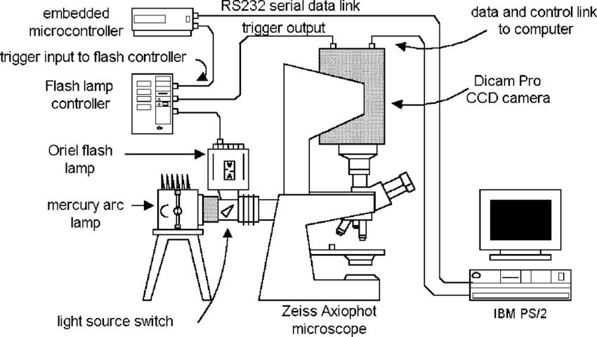 epifluorescence microscope diagram