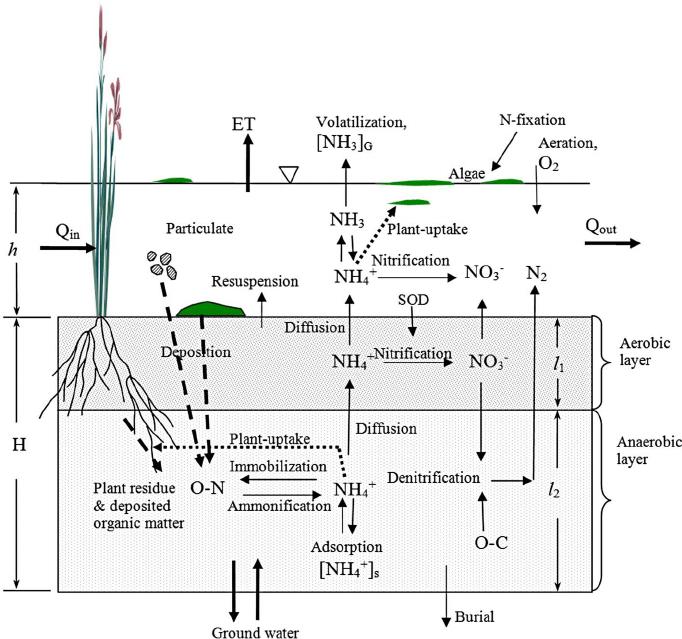 detailed scientific nitrogen cycle diagram