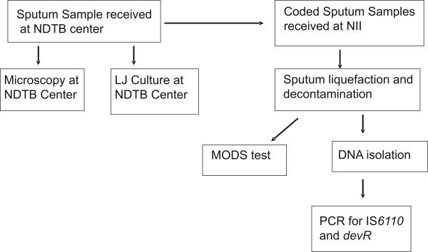 Flow chart describing movement and processing of sputum samples