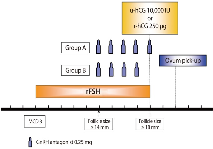 Schematic diagram of controlled ovarian hyperstimulation protocol
