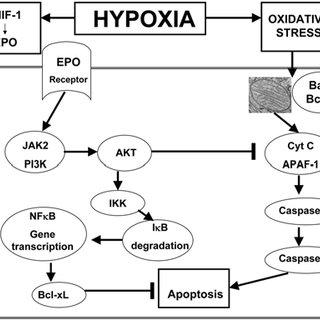 pneumonia flow diagram