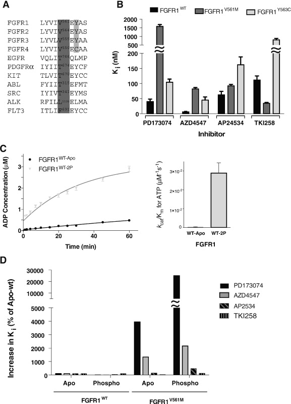 Kinase activity and inhibition of FGFR1 variants Download
