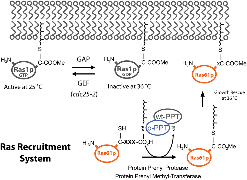 protein temperature diagram
