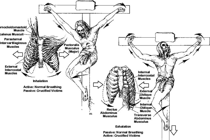 inhalation and exhalation diagram 9