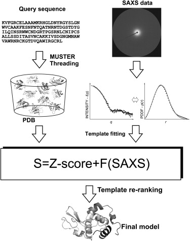 Flow chart of SAXSTER, combining SAXS data and MUSTER for protein