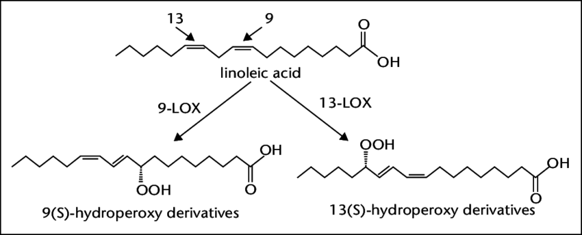diagram of enzyme reaction involving