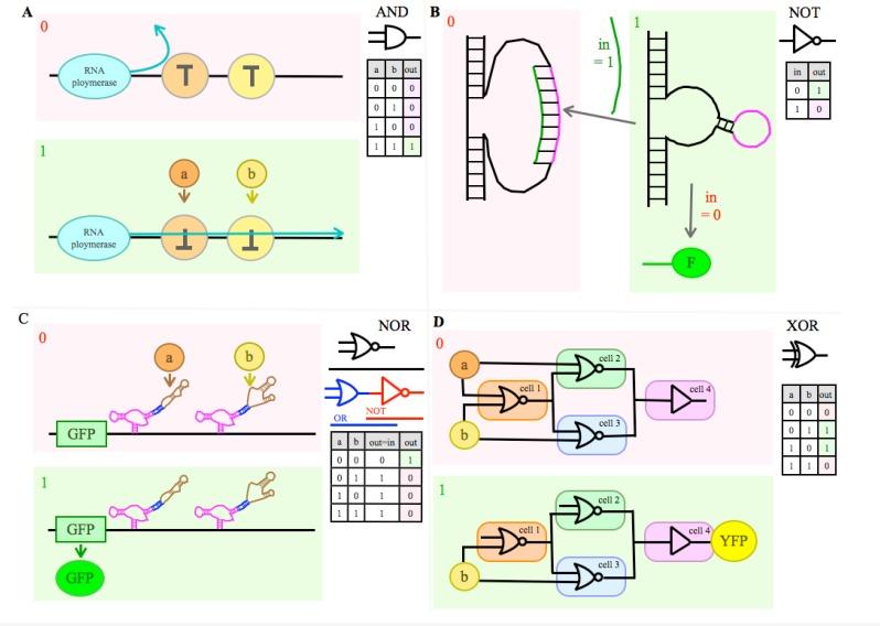 Arithmetic logic unit Shown are four basic Boolean logic gates (AND