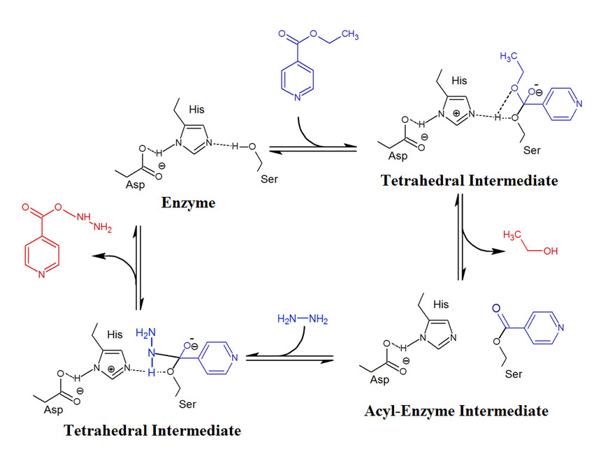 Isoniazid synthesis reaction biocatalyzed using Lipases (chemical