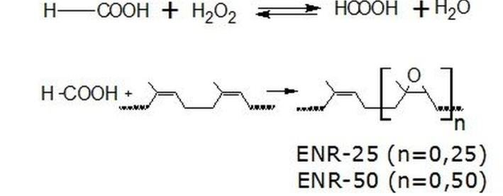 In-situ ENR synthesis reaction (by peroxy formic acid) 4