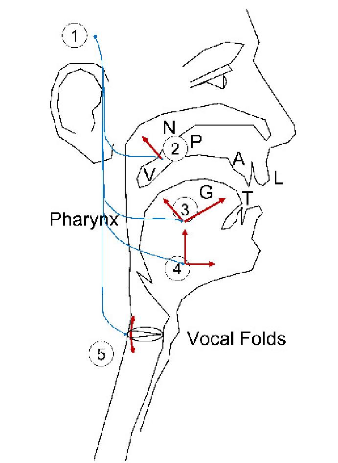 neuromotor units diagram