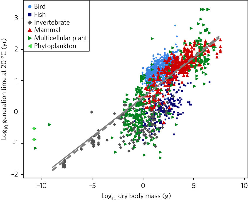 Generation time as a function of body mass plotted on logarithmic