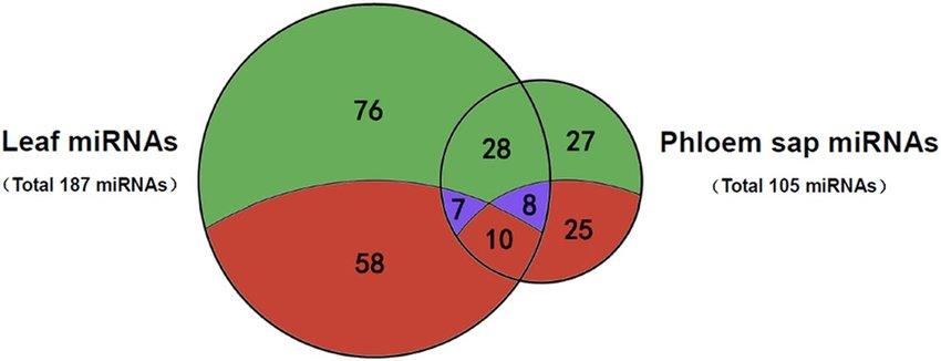 Venn diagram indicating miRNA identification profiles in phloem sap