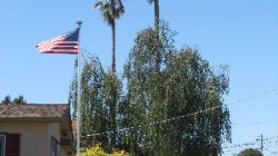 Flag waving in California