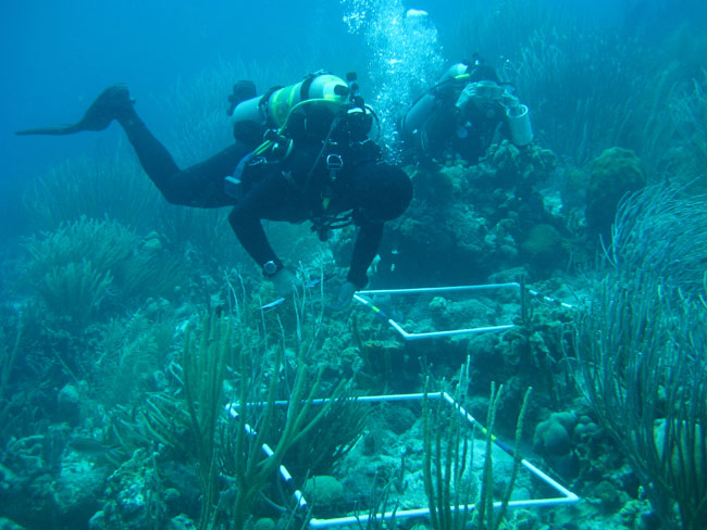 Coral reef jobs currently available - marine biologist job description