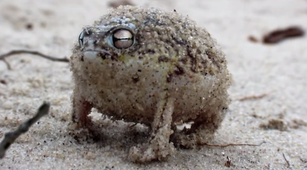 Super Cute Little Baby Wallpapers Strange Little Frog Has The Cutest Angry Squeak
