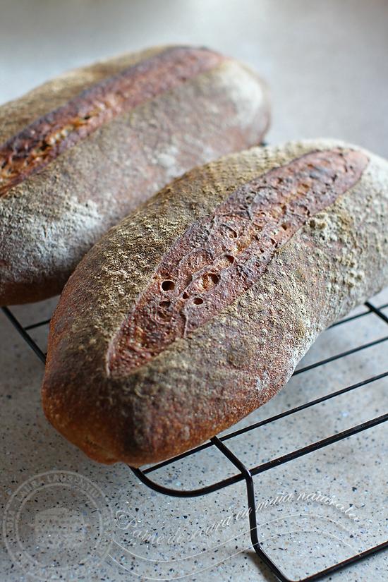 paine de secara cu maia-3