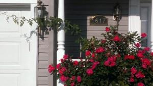 Prune that rose bush
