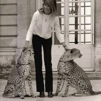Music Legends With Cats: Françoise Hardy