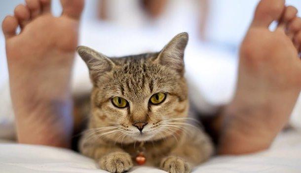 Quanto mais convivo com os gatos, mais aprendo sobre os humanos