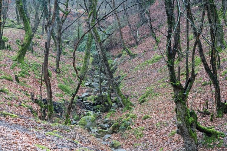 Hyrcanian Forest, SE Azerbaijan, 19/02/16.