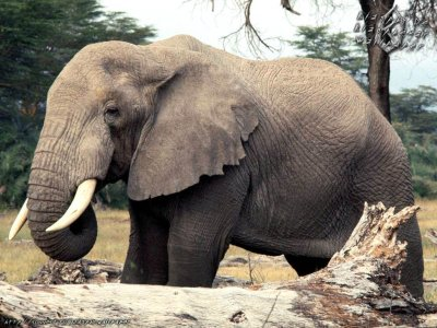 Animals Zoo Park: Elephant Wallpapers For Desktop