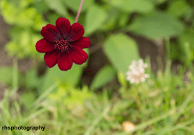 Red-Petalled-Flower
