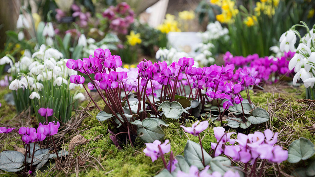 Find out about RHS London Shows 2018 / RHS Gardening