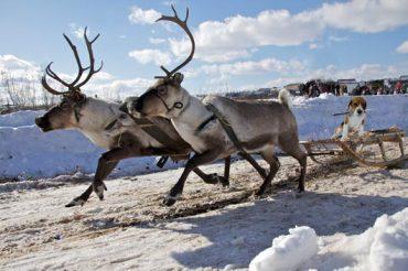 Beagle_Reindeer