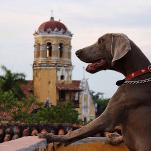 Monty the weimaraner from the roof terrace of the Casa Amarilla Hotel in Mompos