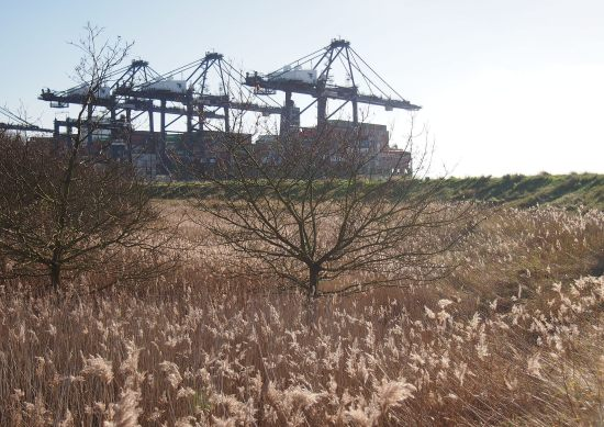 Trimley Marshes - next to the massive container port of Felixstowe