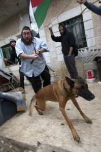 Sheikh Jarrah Settlers Let Attack Dogs Loose Against Protesters