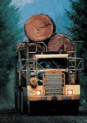 Loggers and Lumberjacks scariest job