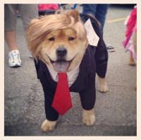 The 15 Most Ridiculous Costumes For Your Dog This ...