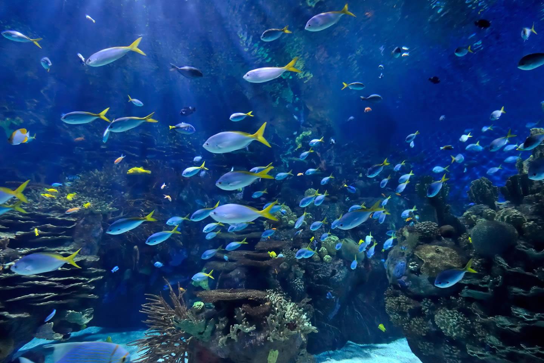Fish Tank 3d Wallpaper Ripley S Aquariums Ripley S Aquariums