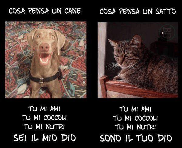 Che Quotes Wallpaper La Differenza Tra Cani E Gatti