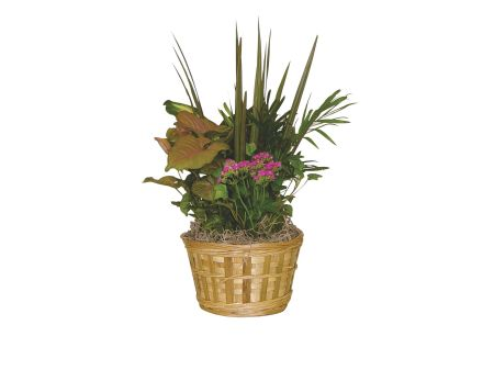Wholesale Dish Garden Containers