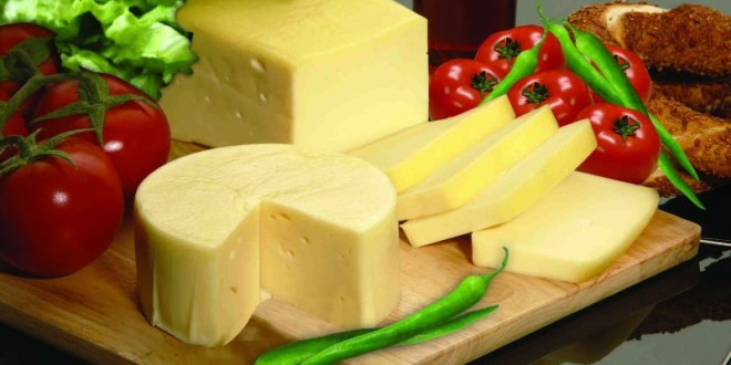 الجبنة الشيدر و فوائدها