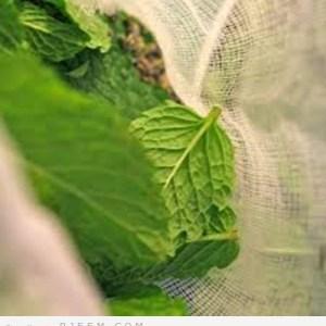 خمس حلول صحية بالاعشاب للتخلص من الهالات السودء تحت العين