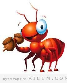 النمل 8 حلول طبيعية لمكافحته
