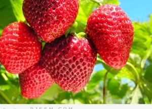 6 اسباب لتناول الفراولة