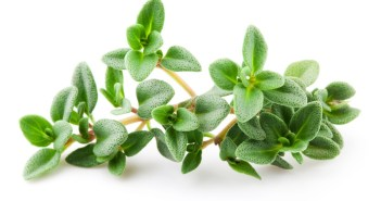 Thyme isolated on white background. Leaves macro