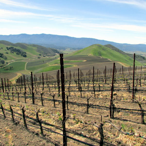 steep Star Lane Vineyard in Happy Canyon