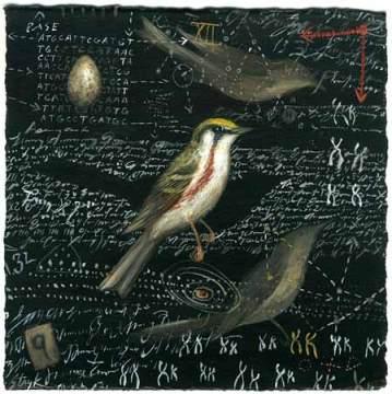 A Lobotomy. Chestnut-sided Warbler.pg