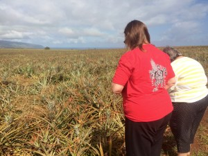 Checking Out Pineapple Fields