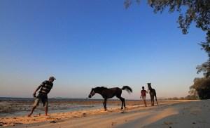 Puru kambera, Sumba, Indonesia