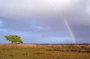 Rainbow over Wasur National Park