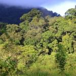 indonesia-sumatra-Gunung Leuser-lowland-forest
