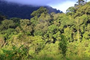 Gunung Leuser lowland forest