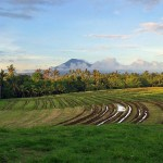 indonesia-bali-rice-fields-overlooking-batukaru